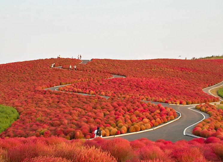 Япония, национальный парк Хитачи