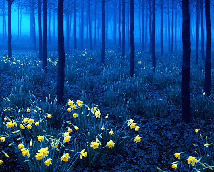 Черный лес Шварцвальд в Германии