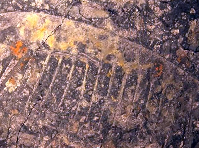Отпечаток древнего существа на камне
