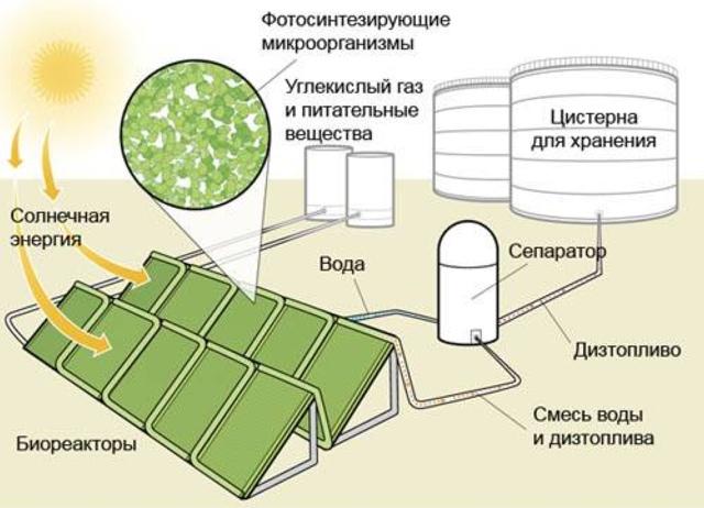 Дизельное топливо из генетически модифицированных бактерий