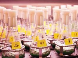 Бактерии вырабатывающие дизельное топливо