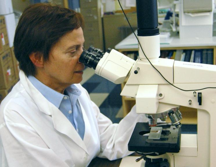 Что изучает световой микроскоп