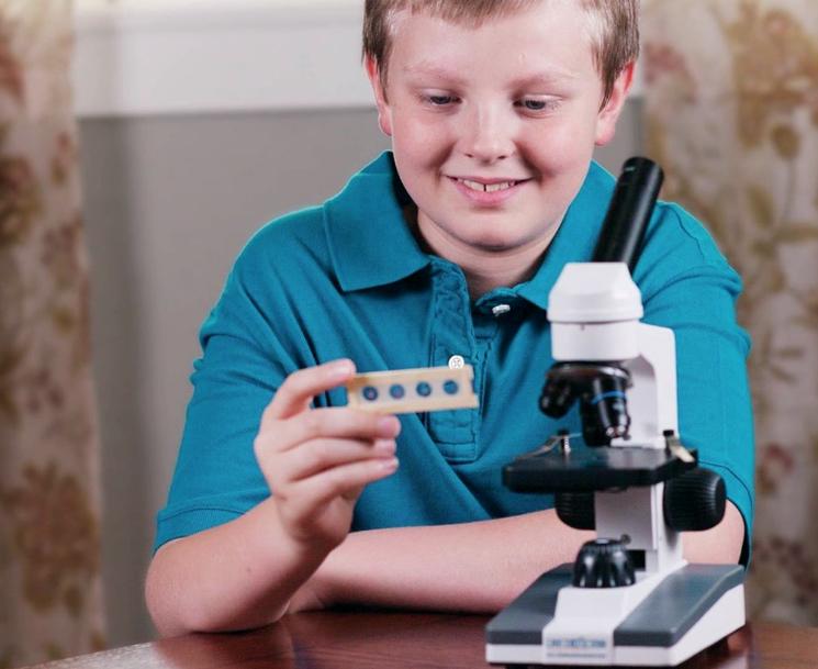chto-v-svetovoy-mikroskop-mozhno-uvidet.jpg