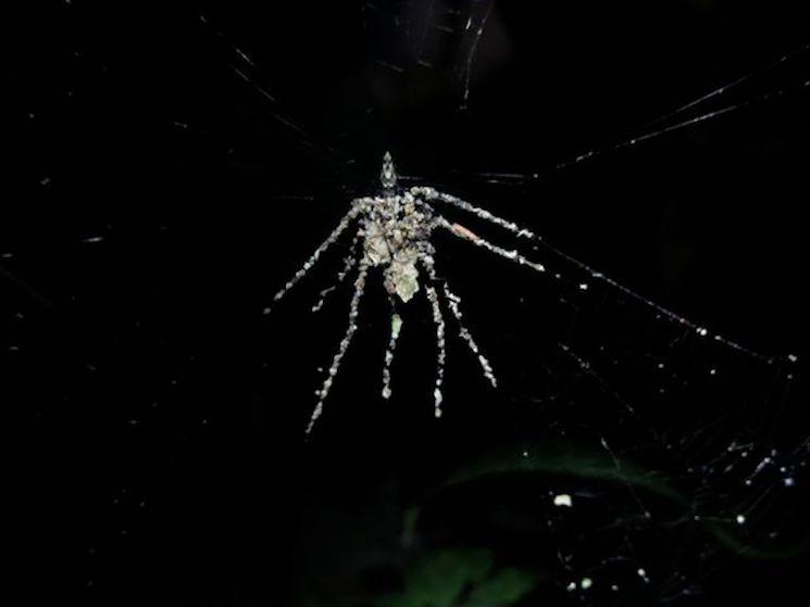 Чучело паука на паутина