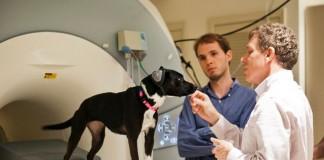 Экперимент понимания речи собакой