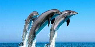 Умеют ли дельфины говорить