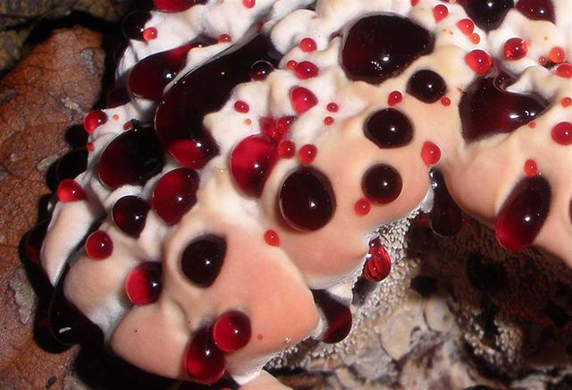 кровоточащий зуб