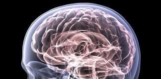 Факты человеческого мозга