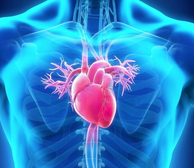 kollaterali-serdechnyye-rezervnyye-arterii-i-ikh-razvitiye.jpg