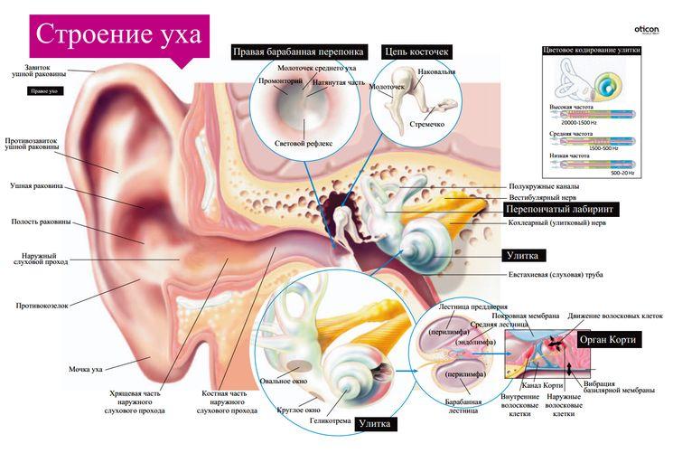 Лечение звона в ушах