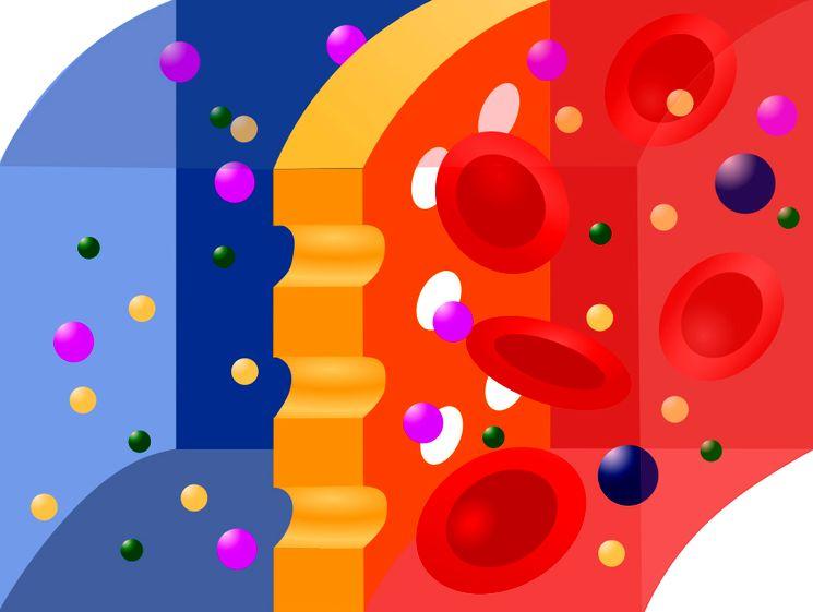 Мембрана для гемодиализа почек