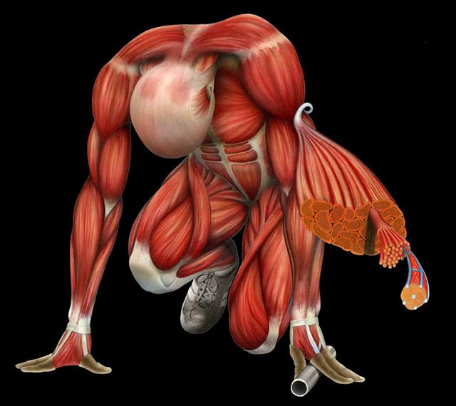 искусственные регенерирующие мышцы