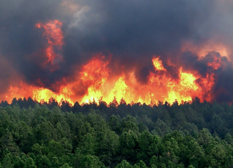 Огненная ловушка в лесном пожаре