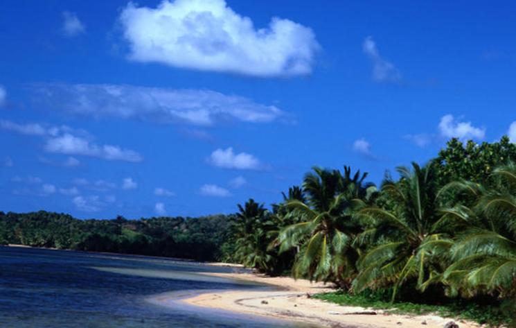 Тропическая растительность острова Мадагаскара