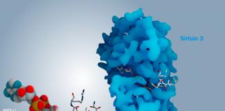 3D модель пептида