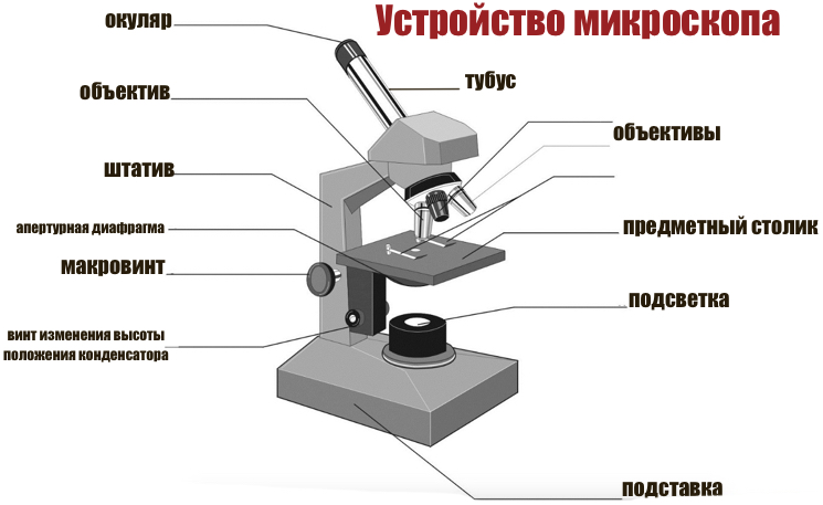 Устройство на базе школьного микроскопа