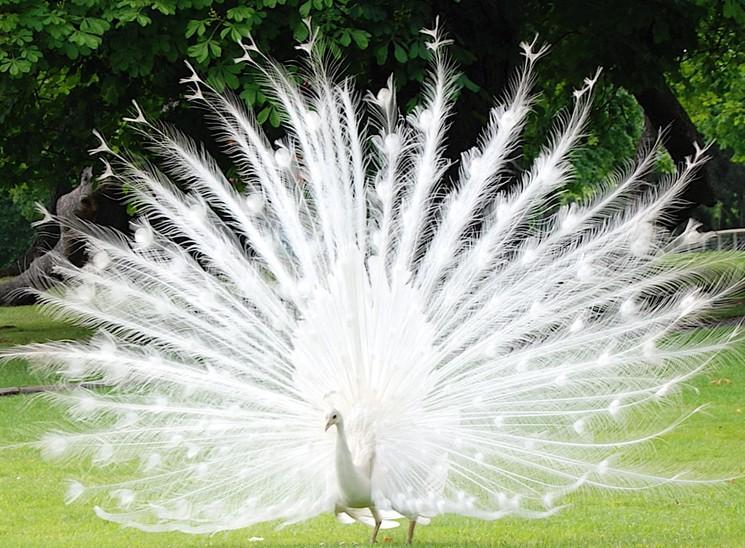 Как можно красивее картинки природы животных людей