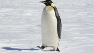 Американский исследователь утверждает, что нашёл на Марсе пингвинов, и предъявил доказательство