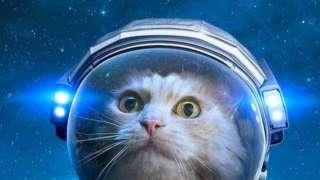 К годовщине космического полета Белки и Стрелки: Какие ещё животные использовались в экспериментах