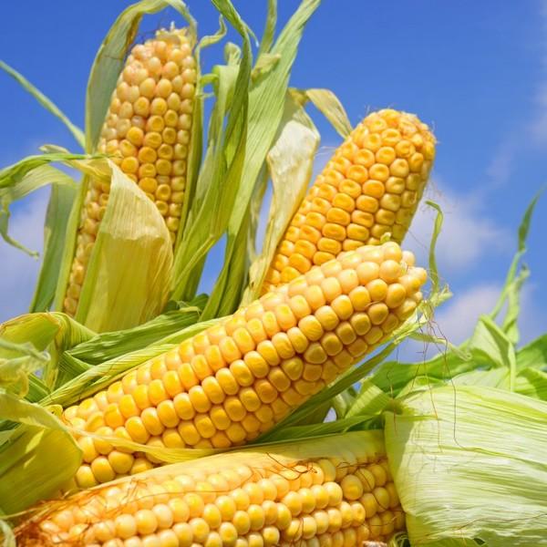 Актуальные цены на кукурузу, размещение объемов на закупку и продажу!
