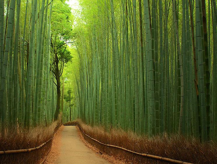 Волшебный бамбуковый лес в Японии