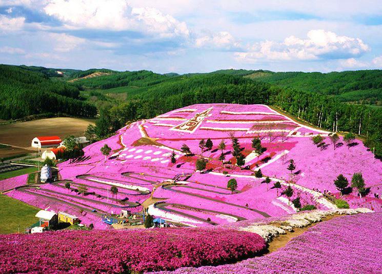Парк Такиноуэ с цветами щибазакура, Япония