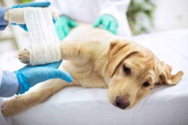 Артрит у собак — признаки и лечение