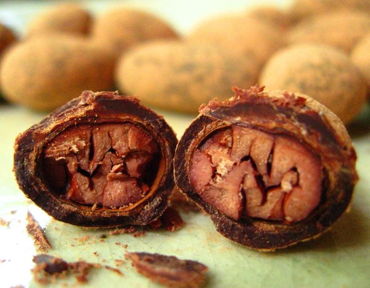 Какао боб в разрезе