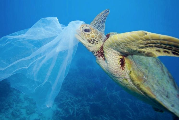 Черепахи едят пакеты в океане