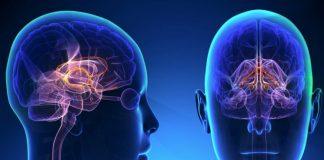 Дофамин в организме человека