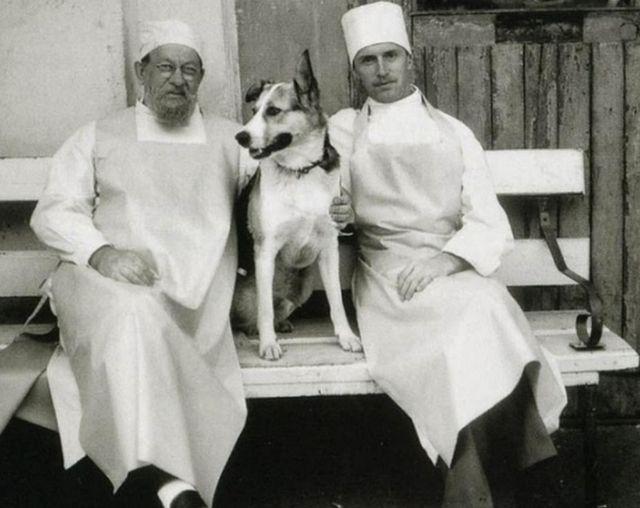 Собачье сердце Булгакова