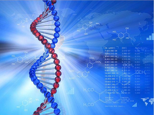 Цепь ДНК