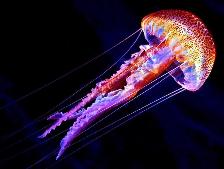 Уникальные светящиеся медузы