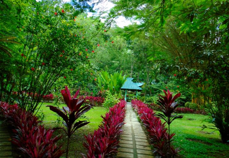 Уникальная флора Филиппин