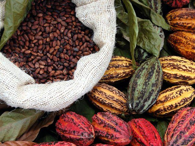 Какао плоды и какао бобы