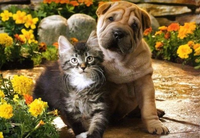 Полезные лакомства для кошек, собак и уход за ними