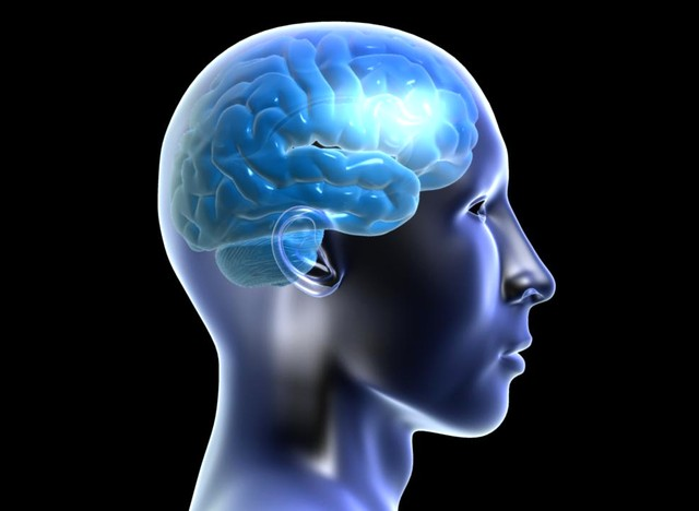 Мифы о мозге человека