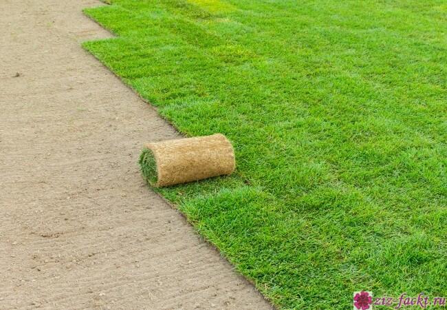 Ландшафтный дизайн и рулонный газон в Сочи