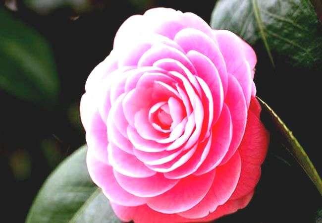 Красочный букет цветов на подарок