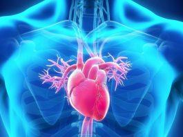 Коллатерали - сердечные резервные артерии и их развитие