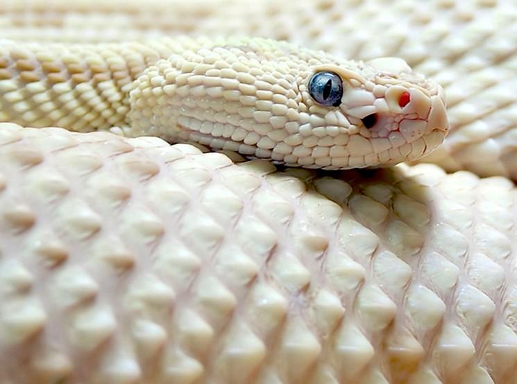 Красивые животные альбиносы