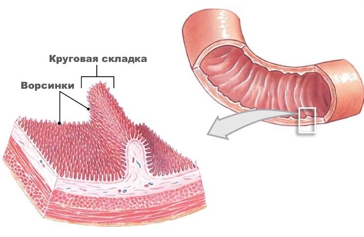 krugovaya-skladka-i-vorsinki.jpg