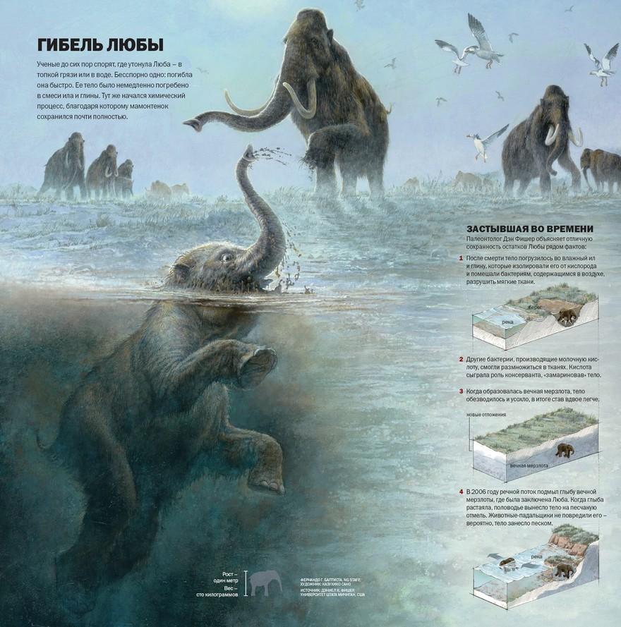 Теория гибели мамонтенка найденного в мерзлоте
