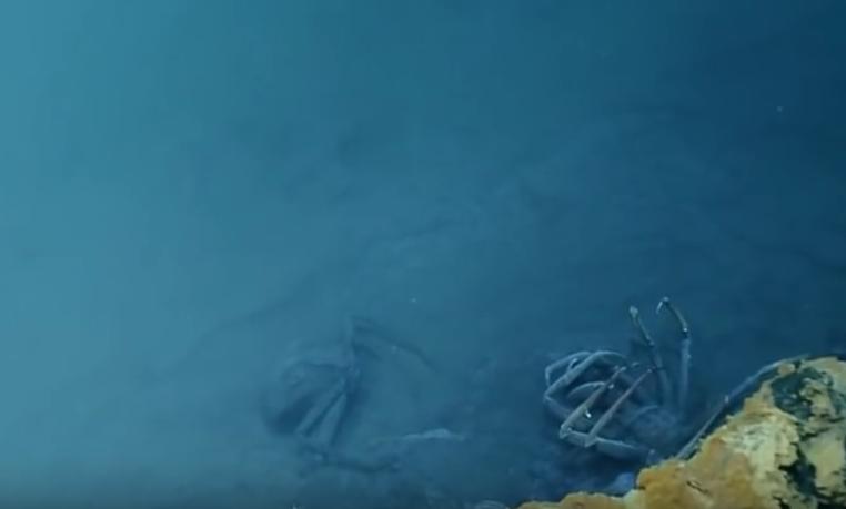 мертвые крабы в соленом озереы на дне мексиканского залива