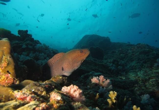 Дайвинг и подводная охота. Что для этого нужно?