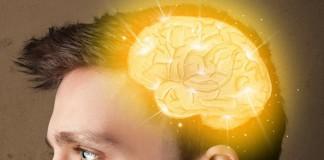 3D модель своего мозга