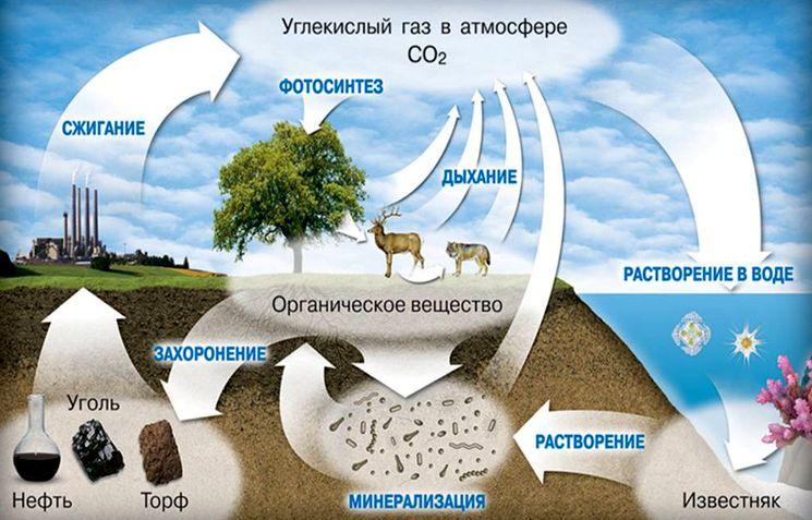 Циркуляция углерода в биосфере