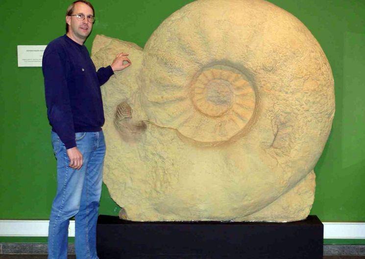 Огромная раковина аммонита в музее