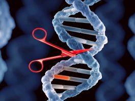 Пациенту с ВИЧ были внедрены кровяные клетки с отредактированным геномом