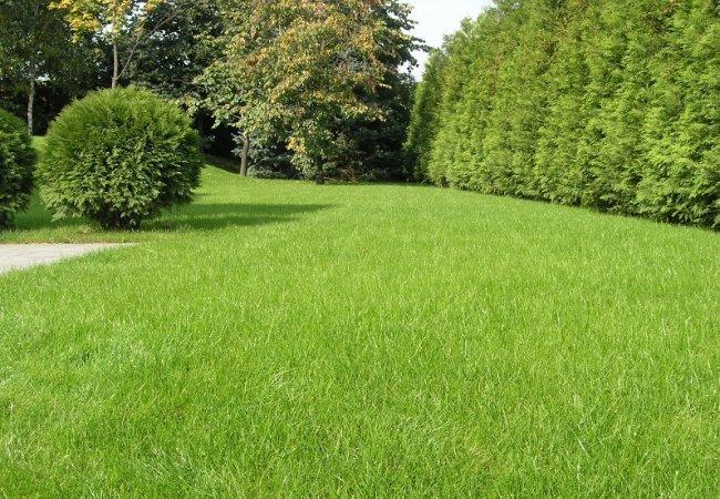 Рулонный газон в Сочи